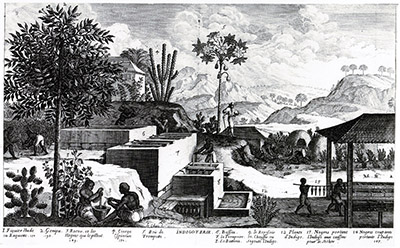 Indigo manufactory: range of basins in which indigo was extracted (Histoire générale des Antilles, 1667).[/caption]  On October 21st, 1806, Napoleon had decreed the Continental System, a measure taken to deprive England of any contact with the continent. For this reason some products were missing, such as indigo, a blue dye. The government suggested to replace it by the blue starch extracted from woad. Blue dye can be obtained from its leaves. In 1811, the government opened a competition to develop woad cultivation. According to Nicéphore: